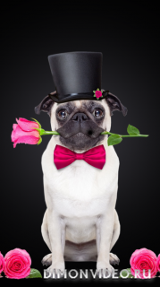 dog-romantic