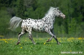 Самые красивые лошади мира 3