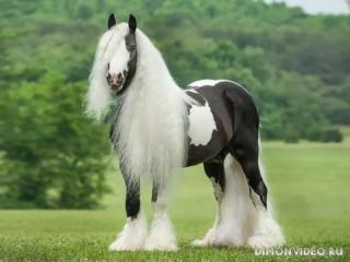 Самые красивые лошади мира 4