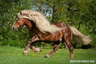 Самые красивые лошади мира 5