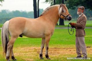 Самые красивые лошади мира 7
