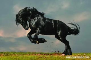 Самые красивые лошади мира 8