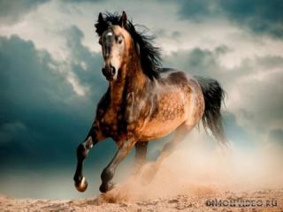 Самые красивые лошади мира 12