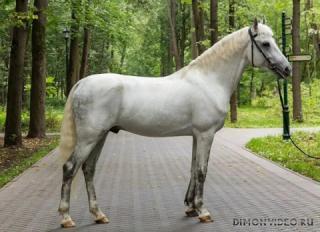 Самые красивые лошади мира 13