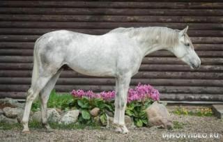 Самые красивые лошади мира 16