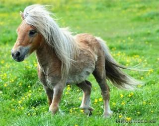 Самые красивые лошади мира 18