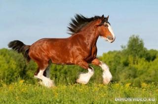 Самые красивые лошади мира 22