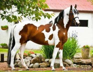 Самые красивые лошади мира 28